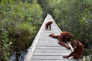 Parque Nacional Tanjung Putting